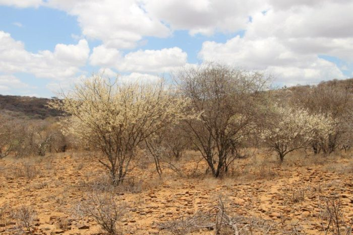 droogte Noord Kenia(Foto Koert Lindijer)