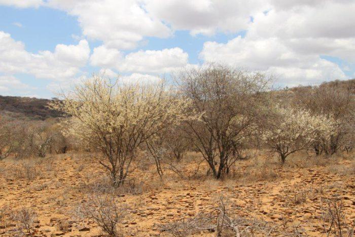 droogte Samburu district