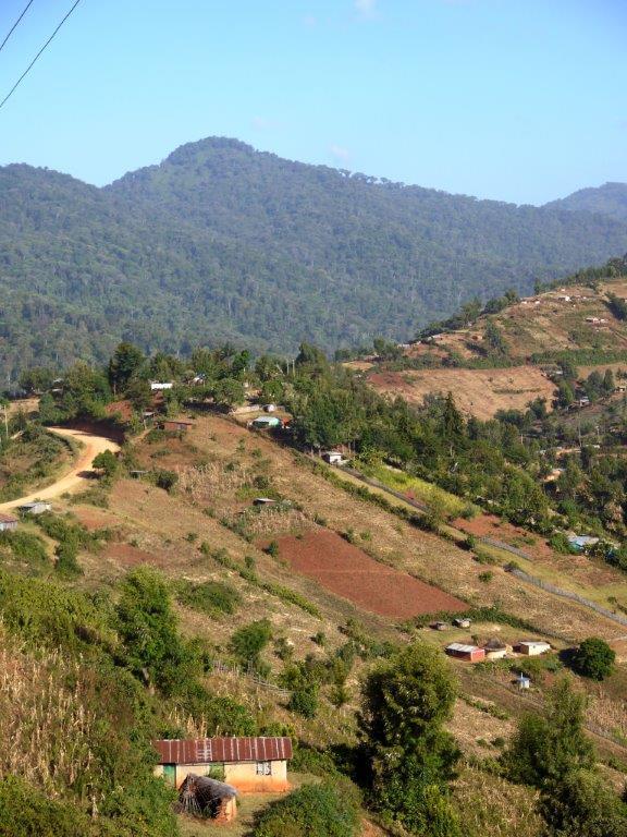 landbouw op weg naar het woud